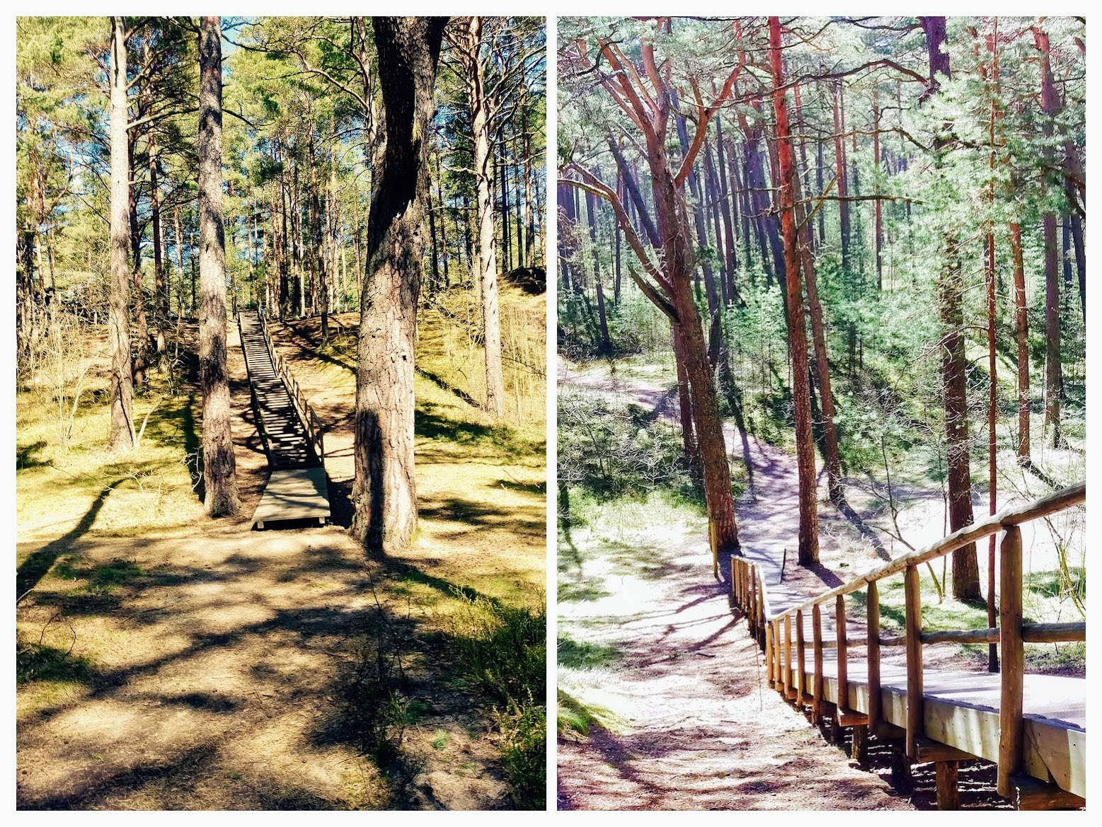 The nature trail provides and the biodiversity of the park - Urban Treetops