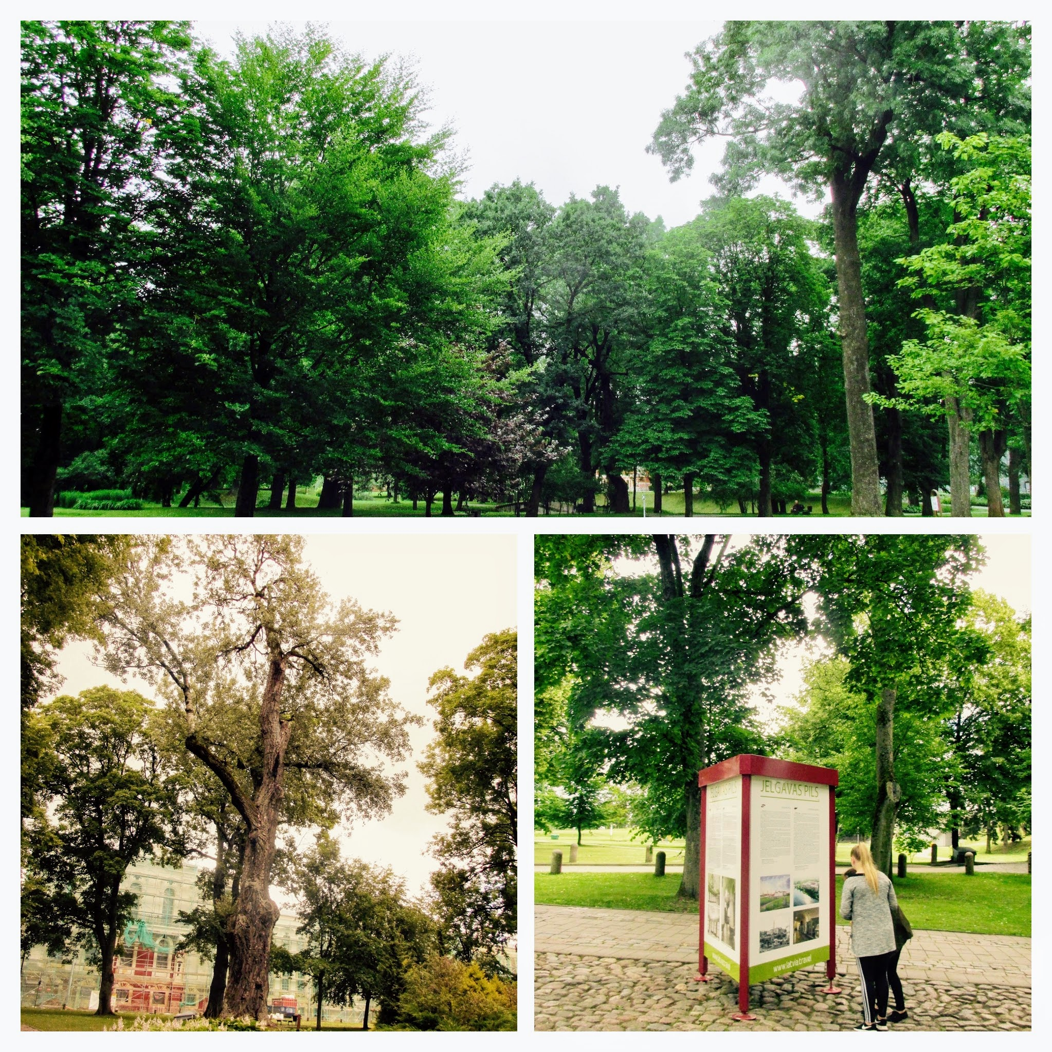The unique and unambiguously green park of Jelgava Palace