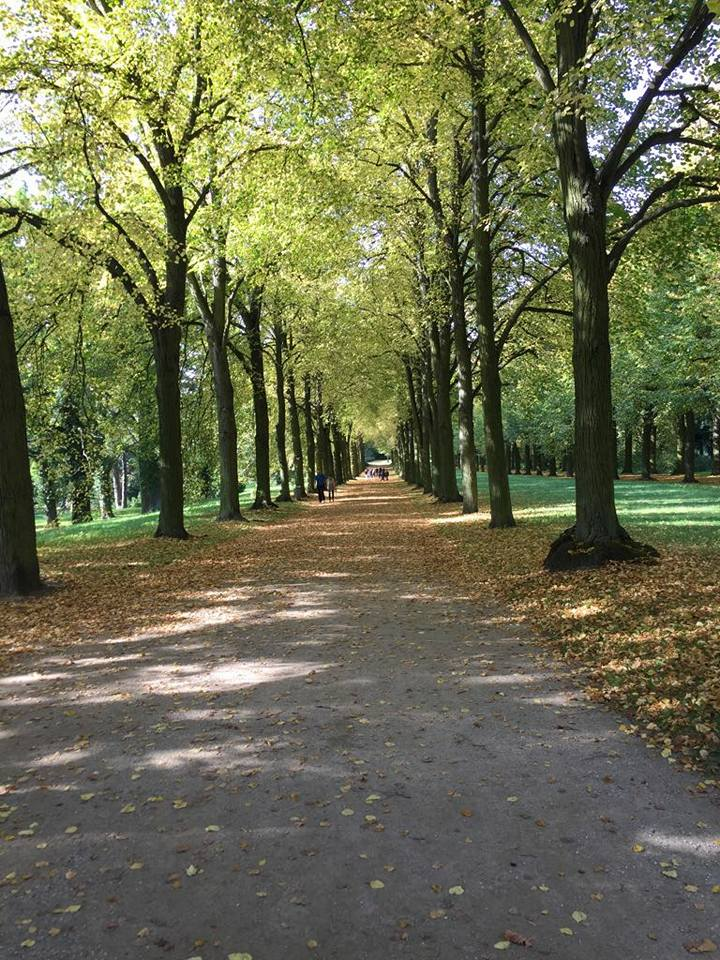 The alley of trees that leads to Belvedere on the Klausberg.