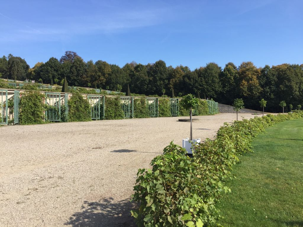 The terracing of the vineyard