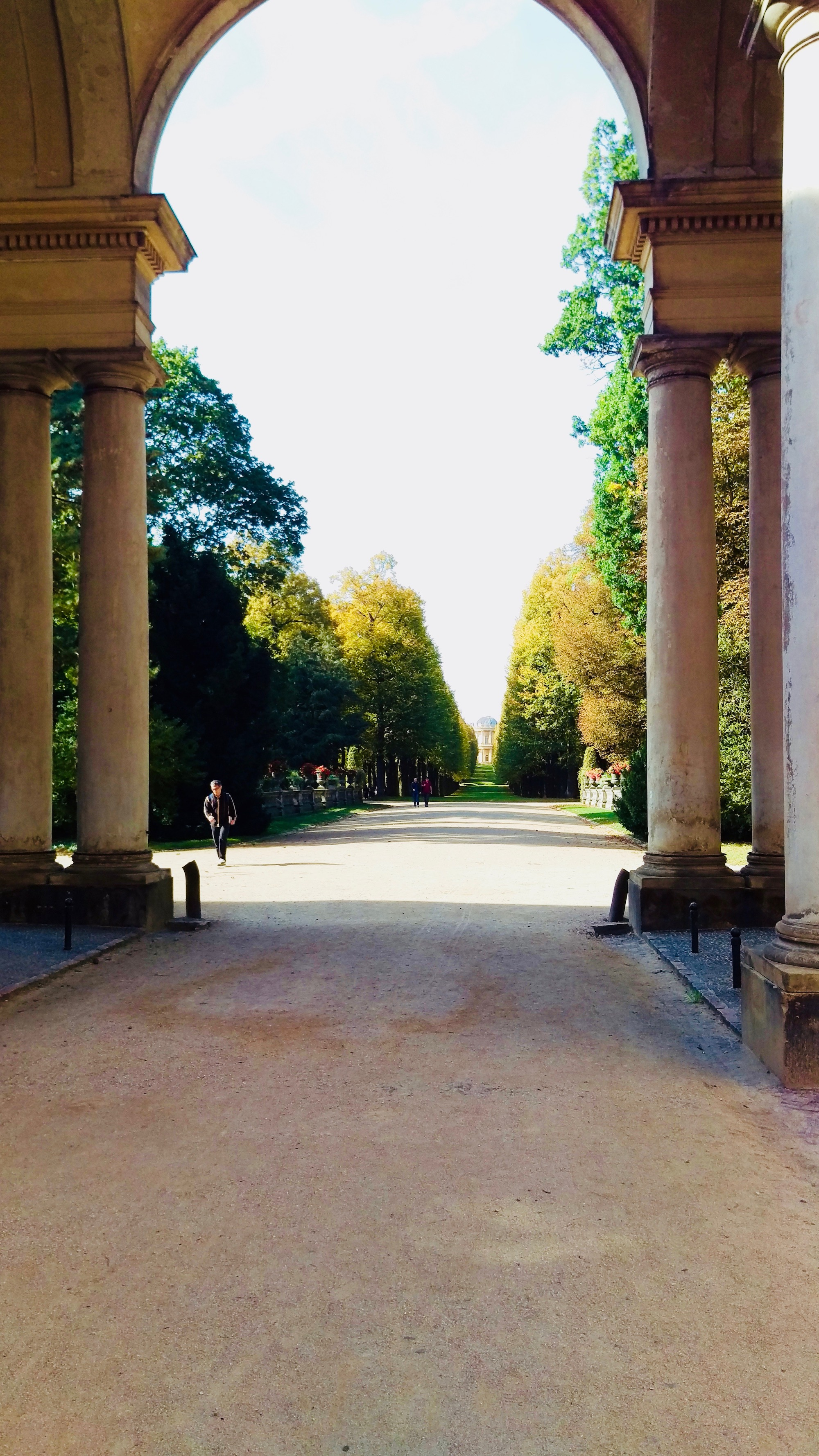 An alley full of trees leads to Belvedere on the Klausberg.