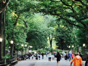Skats uz Manhetenu - Urban Treetops fotogrāfija