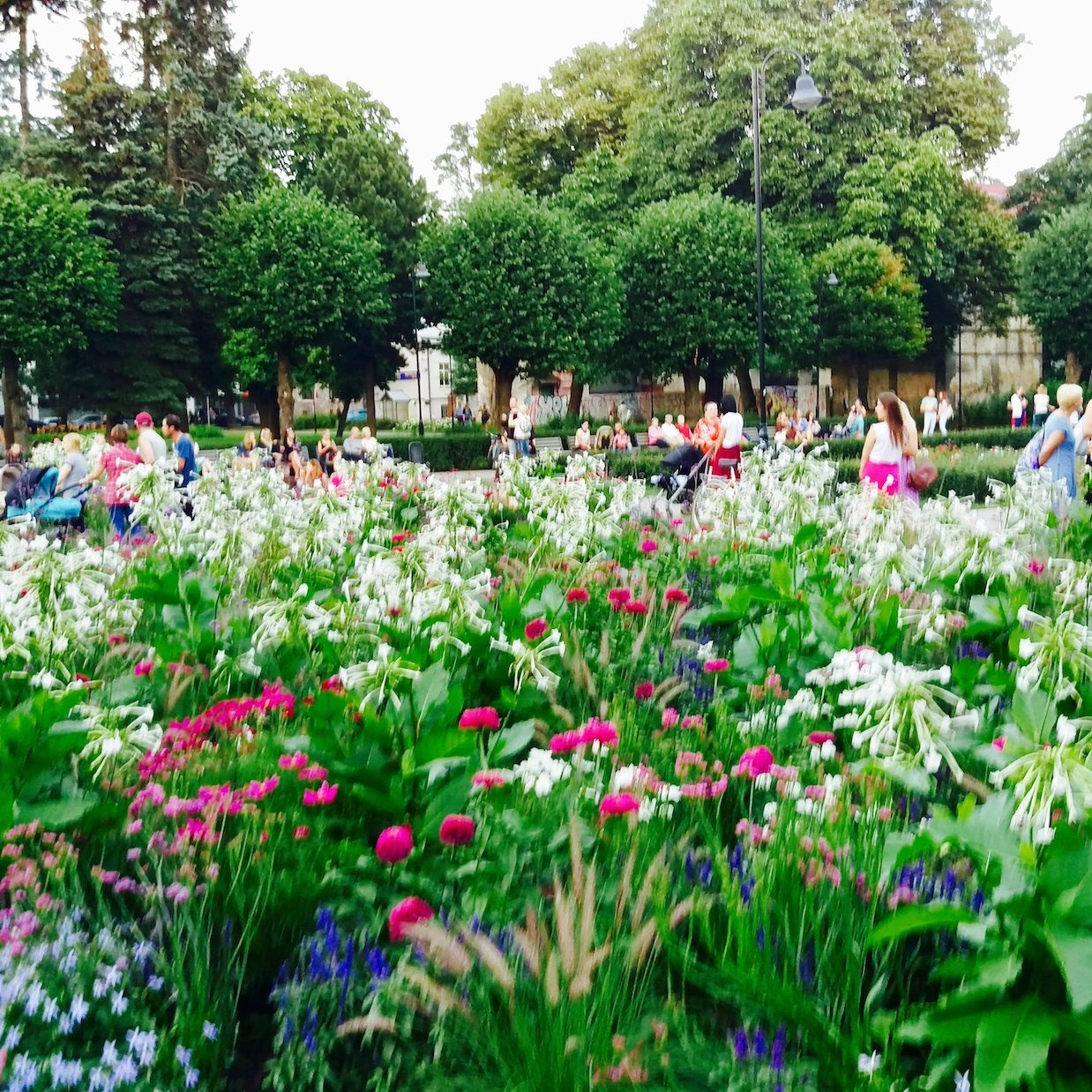 aboti-neighborhood-flowers